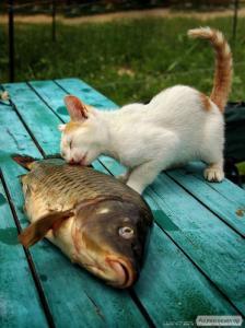 Покупаем рыбные отходы и рыбный неликвид!