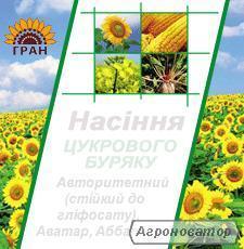 Насіння соняшнику, кукурудзи, цукрового буряку