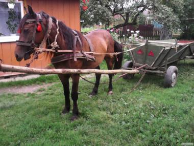продам доброго коня.