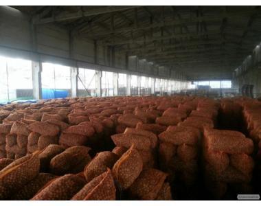Продам целый грецкий орех 2015г, бойный, сухой, в сетках, Харьков