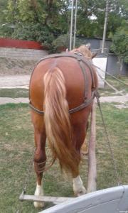 Продам коня 3р.