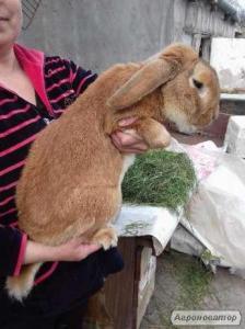Продаж кролів!
