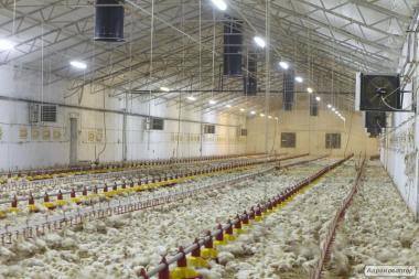 Оборудование для птицеферм, товары для птицеводства