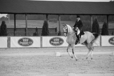 Ищу лошадь в спорт, заезженную, здоровую!