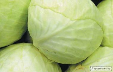 Продам свежую (раннюю) капусту из Узбекистана
