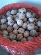 Куплю цельный грецкий орех