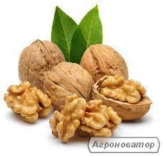 продажа ядра грецкого ореха