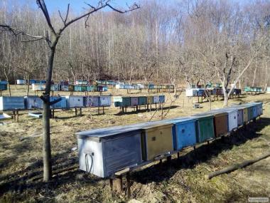 Продам в конце апреля начале мая 250 - 300шт. пчелопакетов