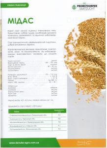 Насіння озимої пшениці Мідас