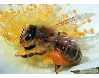 Продам пчелы и пчело семьи