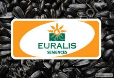 Семена подсолнечника ЕС Янис F1