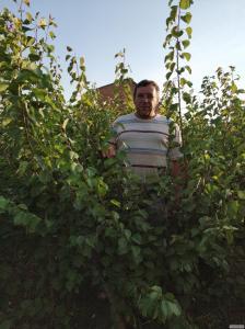 Продам саженцы плодовых деревьев оптом/в розницу
