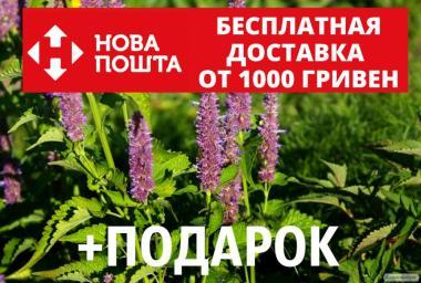 Лофант анисовый семена 20 шт Многоколосник фенхельный