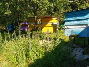 Продам пчелосемьи, Черниговская обл. https://agro-ukraine.com Подробне