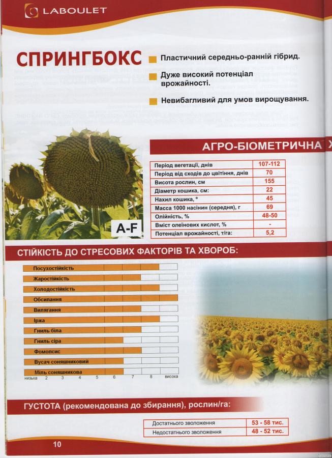 Семена подсолнечника Спрингбокс Лабуле (Laboulet)