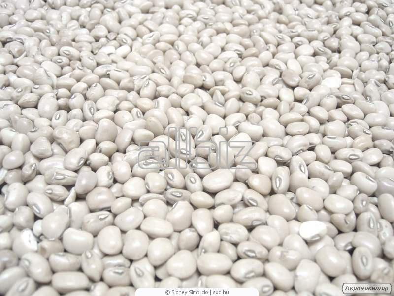 Продам фасоль, семена тыквы, орех грецкий