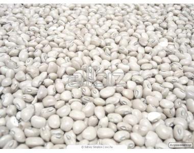 Продам квасоля, насіння гарбуза, волоський горіх
