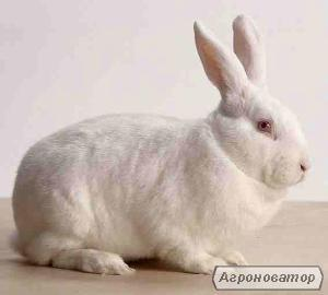 Продам маточное поголовье кролей породы Новозеландская и Калифорнийска