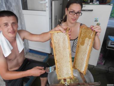 Продам Бджолопакети в Одеській області