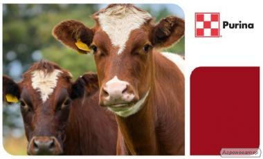 Комбикорм, премикс, концентрат Purina для КРС, коров