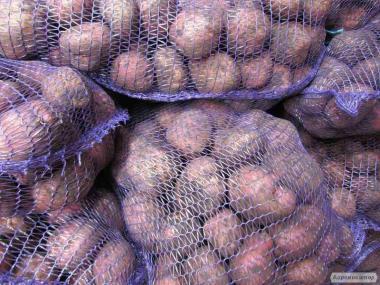 Продам семенной и продовольственный картофель. Разных сортов. Цена дог