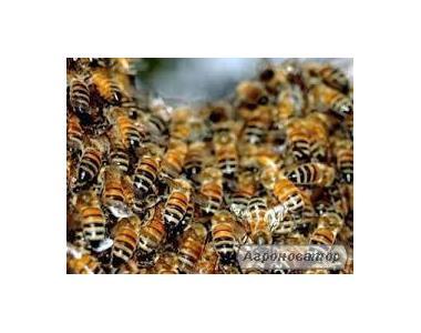 продам бджіл з вуликами.