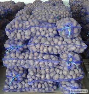 Картофель оптом от производителя 1 – 2 сорта