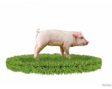 Комбикорм престарт для поросят (МТ) от 1 до 8 кг