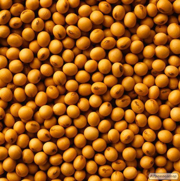 Семена канадской сои - сорт Мэдисон (Medison). 1 репродукция.