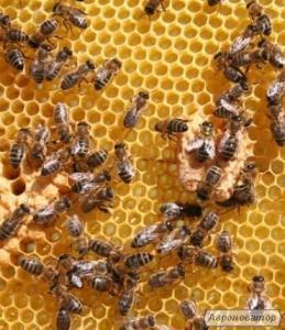 Продам пчелосемья