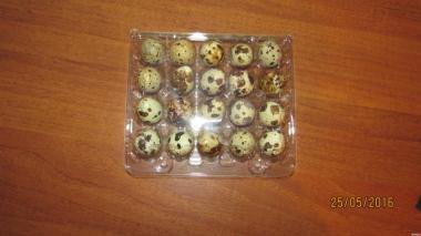 перепелині яйця оптом і в роздріб