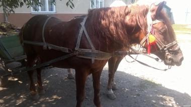 Продам коня 6 лет