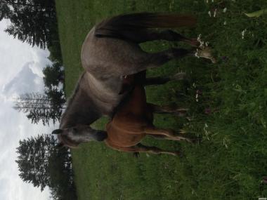 продаю коней в добрі руки!!!