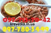 Чорноморська та азовська креветки