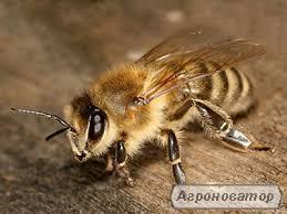 Продам бджоломатки карніка тройзек 1075