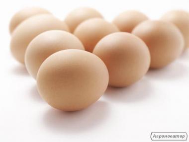 Продам товарные яйца