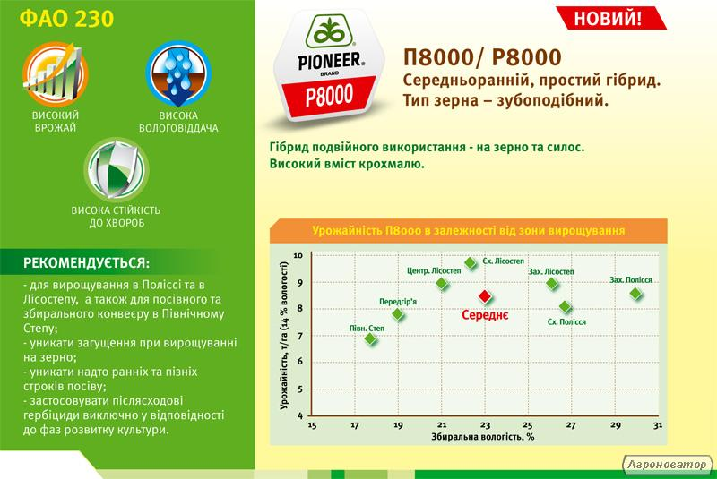 Кукурудза П8000/P8000 (ФАО 230)