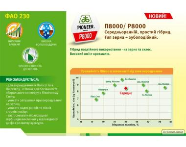 Кукуруза П8000/P8000 (ФАО 230)