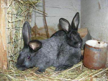 продам кроликов ПС