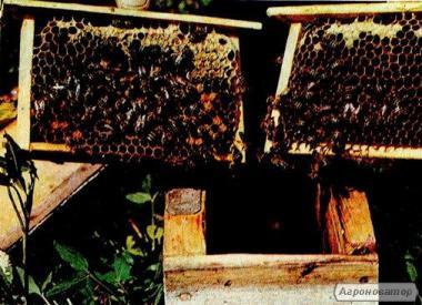 Пчелопакеты, бджолопакети с доставкою...