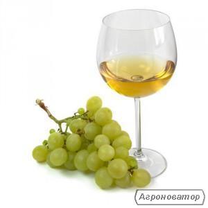 Вино біле домашнє.