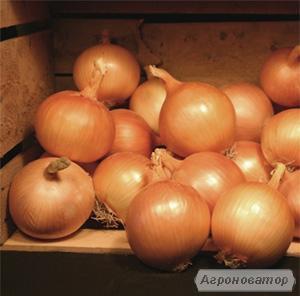Насіння овочевих культур компаній ВИЛМОРИН, ХАЗЕРА.