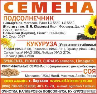 посівний матеріал кукурудзи гібрид ЛЮБАВА ФАО-279
