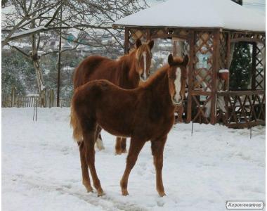 Продам молодую лошадь