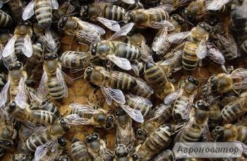 Продам 20 пчелосемей