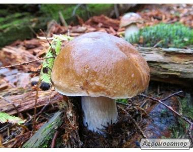Замороженные грибы: белый гриб, польский, подосиновик