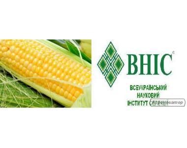 Насіння кукурудзи, сорт