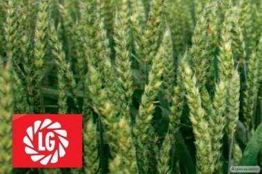 Насіння пшениці Дагмар (Limagrain) 1 реп.