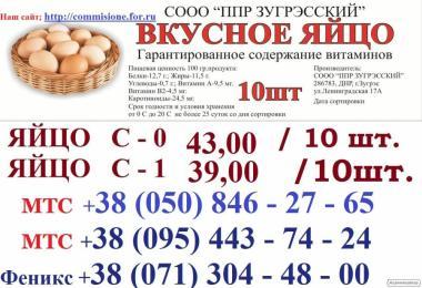 Яйце і курка від фабрики виробника, опт та роздріб !!!