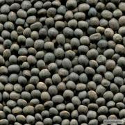 Семена вики озимой, 1-я репродукция